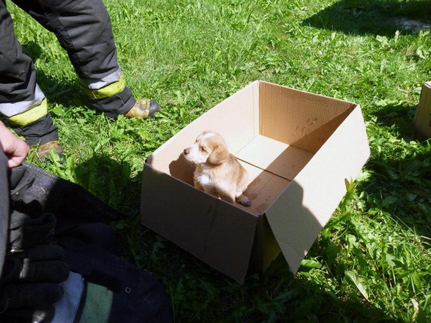 Uratowany szczeniaczek