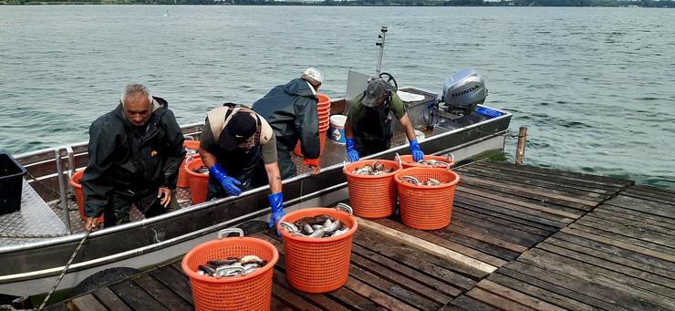Palić ribolov