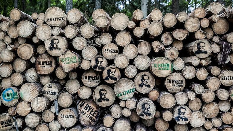 Wizerunki ministra Szyszko pojawiły się na ściętych w Puszczy Białowieskiej pniach drzew