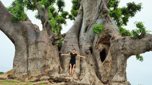 Baobab w Nianing