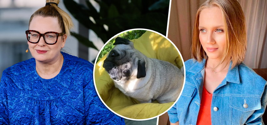 Nosowska przeczytała post Kaczorowskiej swojemu psu. Jego reakcja rozbraja