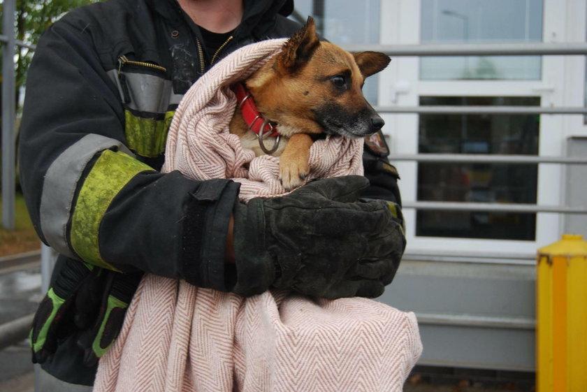 Strażacy uratowali suczkę i jej dwa szczeniaczki