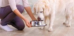 Czy psy mogą jeść winogrona? A orzechy? Sprawdzamy, czy ludzkie jedzenie może zaszkodzić psu!