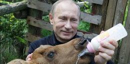 Putin karmi łosia. ZOBACZ
