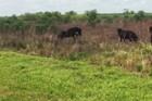Krokodil se krio u šiblju i vrebao ždrebe, a onda ga je primetio konj i POŠTENO GA ISPREBIJAO (VIDEO)