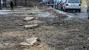 Prezes PiS: przepisy dot. wycinki drzew na prywatnych posesjach będą zmienione