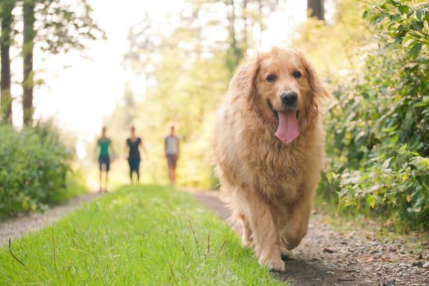 Nasza czytelniczka może wejść praktycznie wszędzie ze swoim czworonogiem, jeśli jest on psem asystującym
