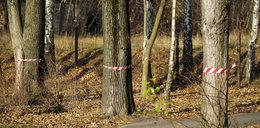Chcą wyciąć 1300 drzew przy Parku Śląskim!