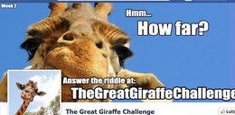 O co chodzi z tą żyrafą?