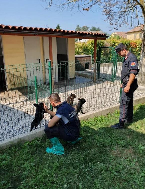 Srbin i Srpkinja uhapšeni u Italiji zbog krijumčarenja ljubimaca