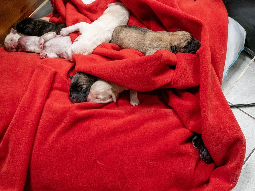 Powstanie pierwsze w Polsce okno życia dla zwierząt