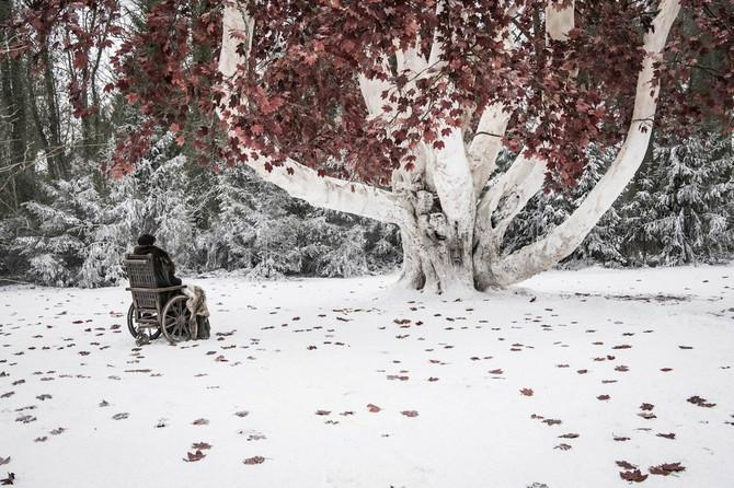 Bren Stark i vateno drvo