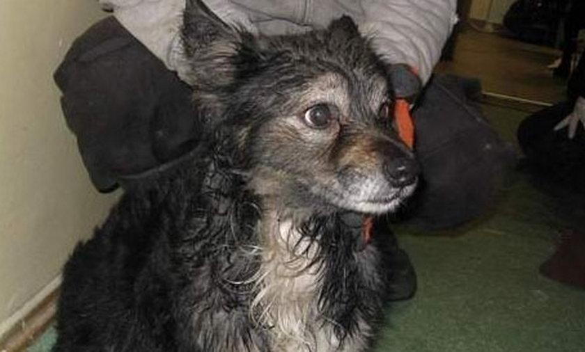 Pies Bajor ze schroniska w Slupsku