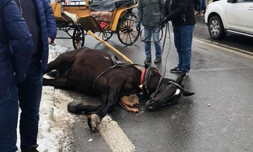 Spłoszony koń biegł po Krupówki