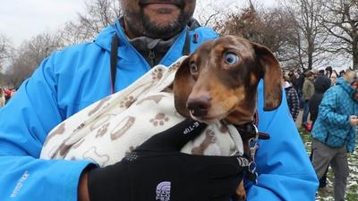 1,000 sausage dogs and their owners turned up for a mass walk through London organised on Instagram