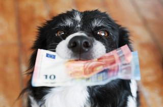 Podatek od posiadania psa w 2021 roku