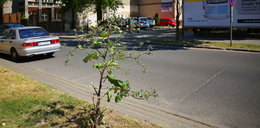 Tak w Łodzi dbają o zieleń