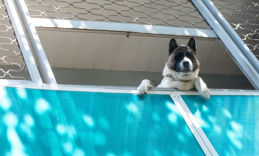 Ponad 2 tys. zł za zostawienie psa na balkonie we Włoszech. U nas w skrajnym przypadku grozi kilka lat więzienia.