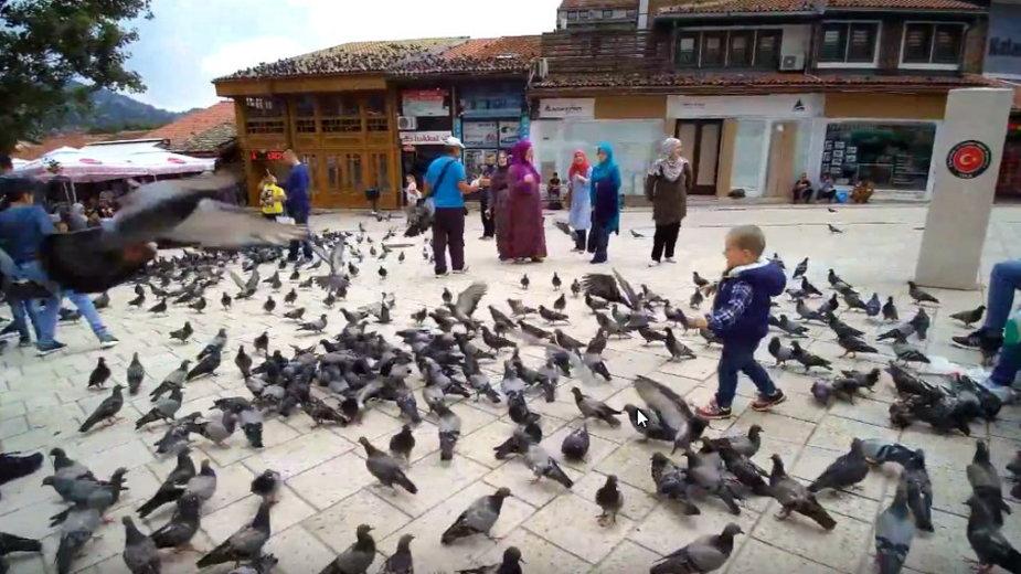 Jeden z symboli Sarajewa - gołębie