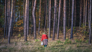 KO: Polskie Lasy stały się plantacją desek na eksport. Chcemy to zmienić, mamy projekt