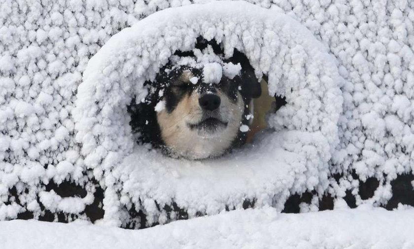 pies, zima, mikołaj, święta, śieżyca