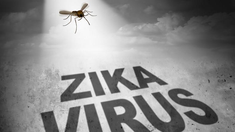 Komar przenoszący wirusa Zika