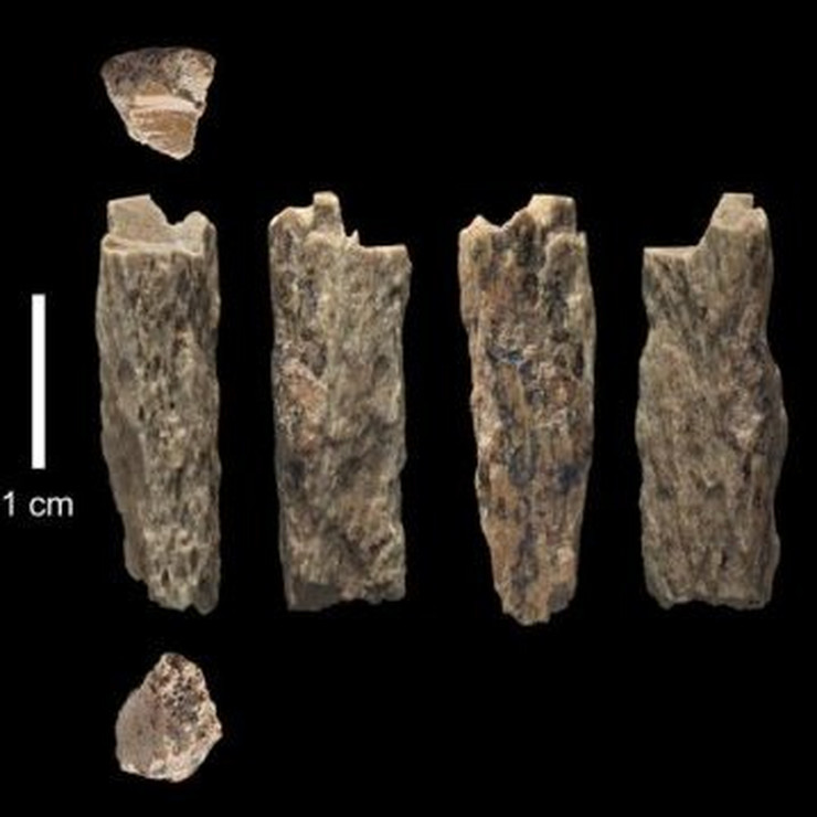 kosti neandertalac denisovan