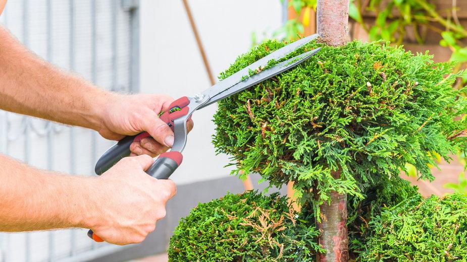 Formowanie krzewów można wykonać samodzielnie - JFsPic/stock.adobe.com