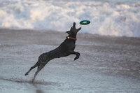 Kiderült, hogy a nagyobb vagy a kisebb kutyák a játékosabbak