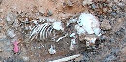Z cmentarza w Gdyni znikają ludzkie zwłoki!