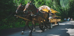 Fiakrzy z Zakopanego skazani za znęcanie się nad końmi. Obrońcy zwierząt: kara jest za niska!