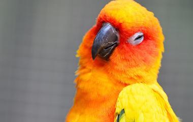 ízületi gyulladás papagájban ízületi fájdalmak fájdalmat okoznak, és hogyan kell kezelni