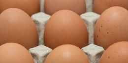 GIS ostrzega przed bakteriami w jajach