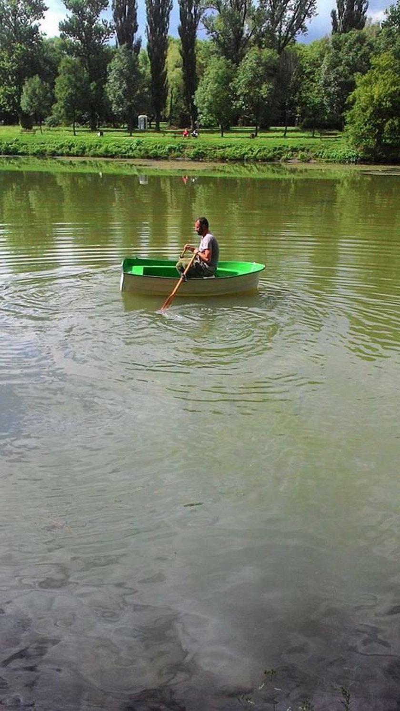 Animal Patrol w Łodzi ratował kaczki, które pływały w stawie pełnym ropy