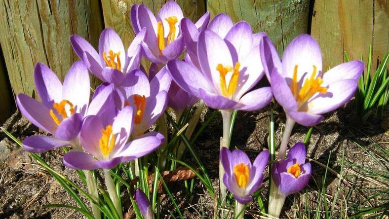Wiosna w Lubinie. Fot. Majka_h1/Daj znać!