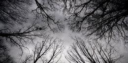 Tragedia w lesie! Konar spadł na 5-latka. Dziecko zmarło