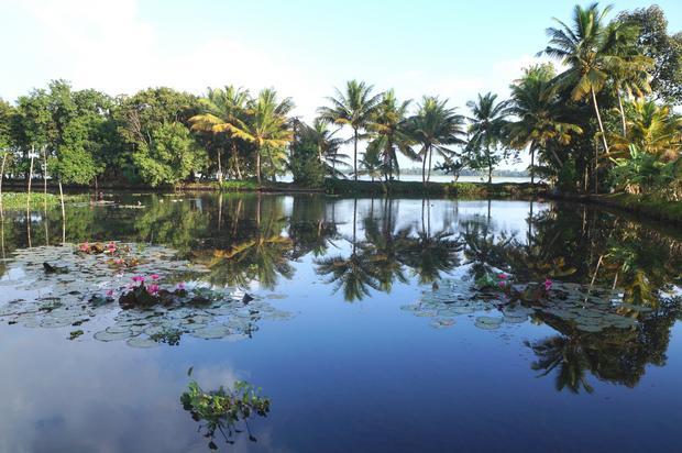 Zawsze zielone rozlewiska Kerali tzw. Backwaters
