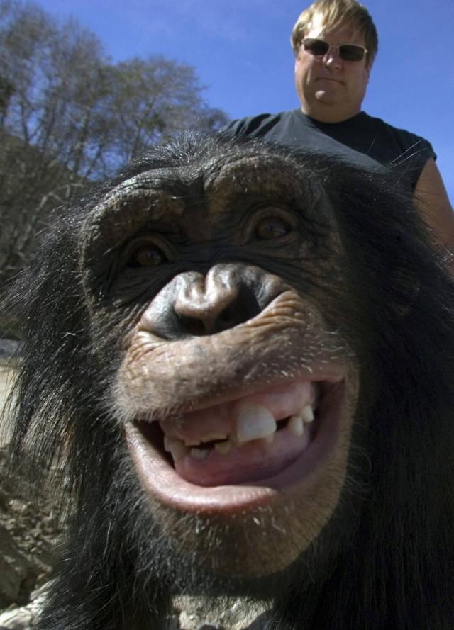Šimpanze i pacovi znaju da se smeju
