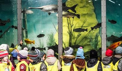 Wielkie akwarium na MTP. Dzieci zobaczą je za darmo