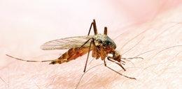 Ugryzł cię komar? Wcale nie musi swędzieć