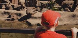 Lekkomyślni rodzice przesadzili. Mogło dojść do tragedii w zoo