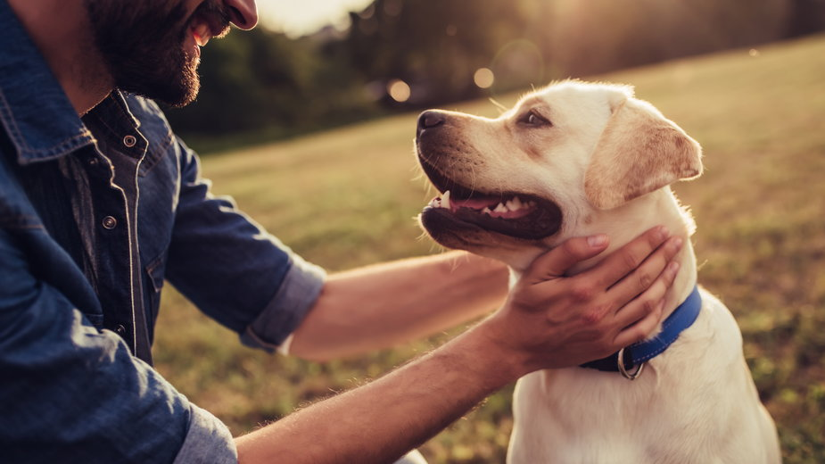 Nie każde słowo, które mówimy do psa jest dla niego zrozumiałe - Vasyl/stock.adobe.com