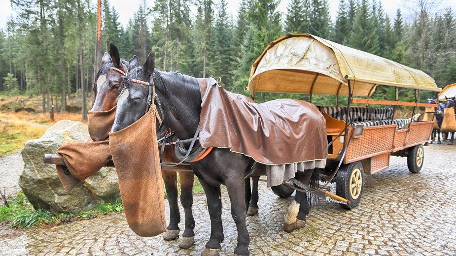Zaprzęg konny (fasiąg) na drodze do Morskiego Oka, Tatry (zdjęcie ilustracyjne)