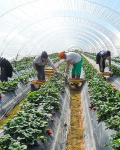 Jak przygotować tunel foliowy w ogrodzie pod uprawy?