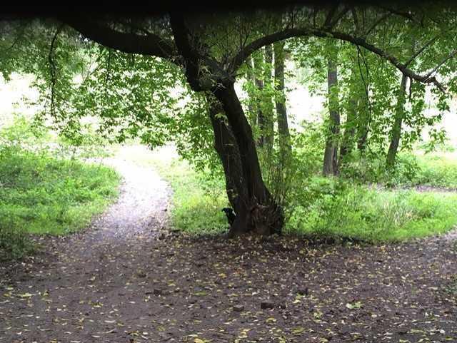 Pies był przywiązany do drzewa w lesie nad Wisłą