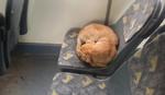 NE PLAŠI SE NI BUSPLUS KONTROLE Evo ga najspokojniji putnik u gradskom prevozu
