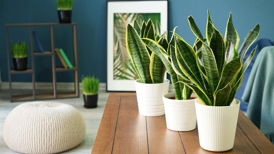 W domu warto mieć kwiaty, które oczyszczają powietrze z toksyn