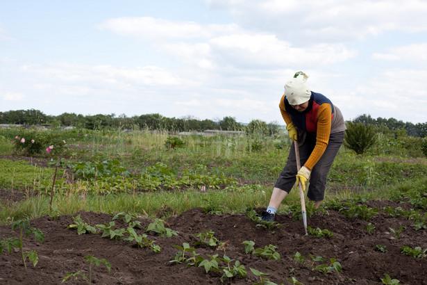 W 2013 roku gospodarstwa rolne o powierzchni ponad 100 ha zatrudniały 3% pracujących w rolnictwie, wytwarzając jednocześnie 16% wartości produkcji rolnej
