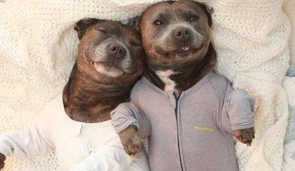 Najsłodsze psiaki internetu. Śpią w piżamie