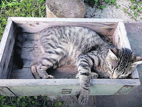 U lovu stradaju i domaće životinje: Jedna od stradalih mačaka u okolini Kraljeva